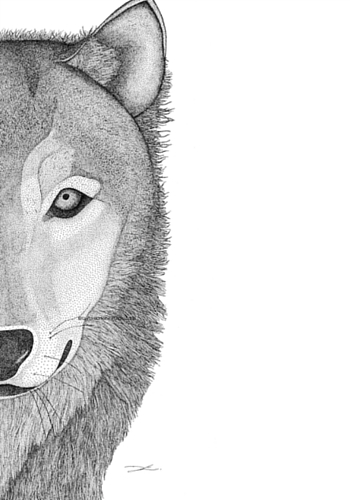 Wolf print by Taylored Dots